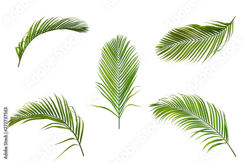 Autocollant pour porte Palmier Set of palm leaves isolated on white background