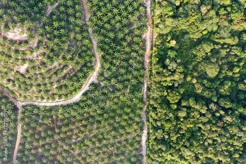 Palm oil plantation at rainforest edge Wallpaper Mural