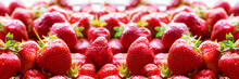 Fresh Juicy Strawberries Wide Banner Or Panorama Concept