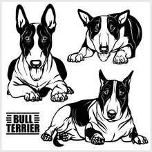 Bull Terrier - Vector Illustra...