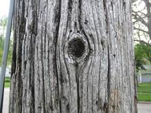 Tree Knothole Close-up