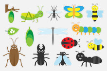 Different Colorful Insects Pic...