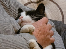 Close Up Of Black And White Cat Getting Petted