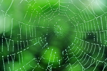 The Center Of The Spider Web Is Strewn With Drops Of Rain Dew In Morning Like Beads On Blurred Green Background. Geometry, Line, Ring, Spiral. Macro