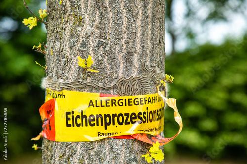 Ταπετσαρία τοιχογραφία tree with text vorsicht allergiegefahr durch eichenprozessionsspinner Raupen und