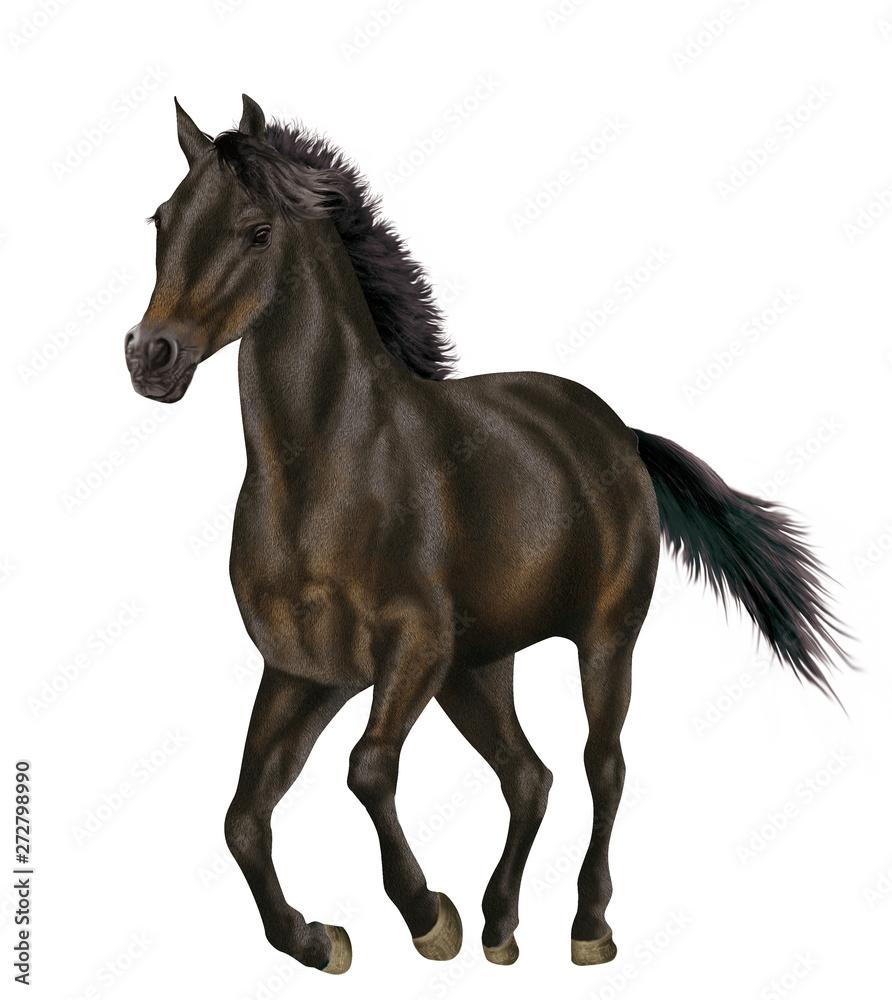 cheval, de face, isolé, animal, noir, étalon, noir, galop, mammifère, brun, ferme, crin, galop, chevalin, debout, courir, sauvage, amoureux des chevaux, fond blanc, arabe, nature, portrait, jument, po
