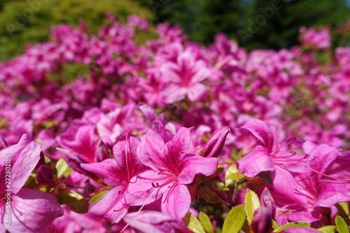 Spoed Fotobehang Roze Landschaft/Wald/Blumen in Bayern