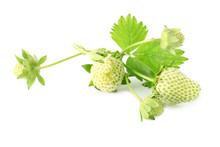 Unripe Strawberry On White Background