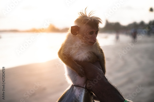 Photo  Beautiful little monkey in the hands of his master