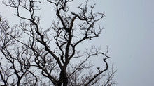 A Bare Tree With Twisting Bran...