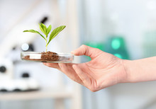 Scientist Holding Petri Dish With Green Plant In Laboratory, Closeup