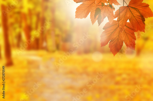 Cadres-photo bureau Melon Autumn background. Yellow leaf in autumn park on a blurred background