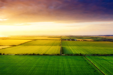Aerial view on the field during sunset. Landscape from drone. Agricultural landscape from air. Agriculture - image