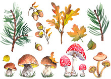 Forest Set With Fly Agaric Mushroom, Toadstool, Boletus Mushrooms, Acorns, Oak And Maple Leaves. Watercolor On White Background. Isolated Elements For Design.