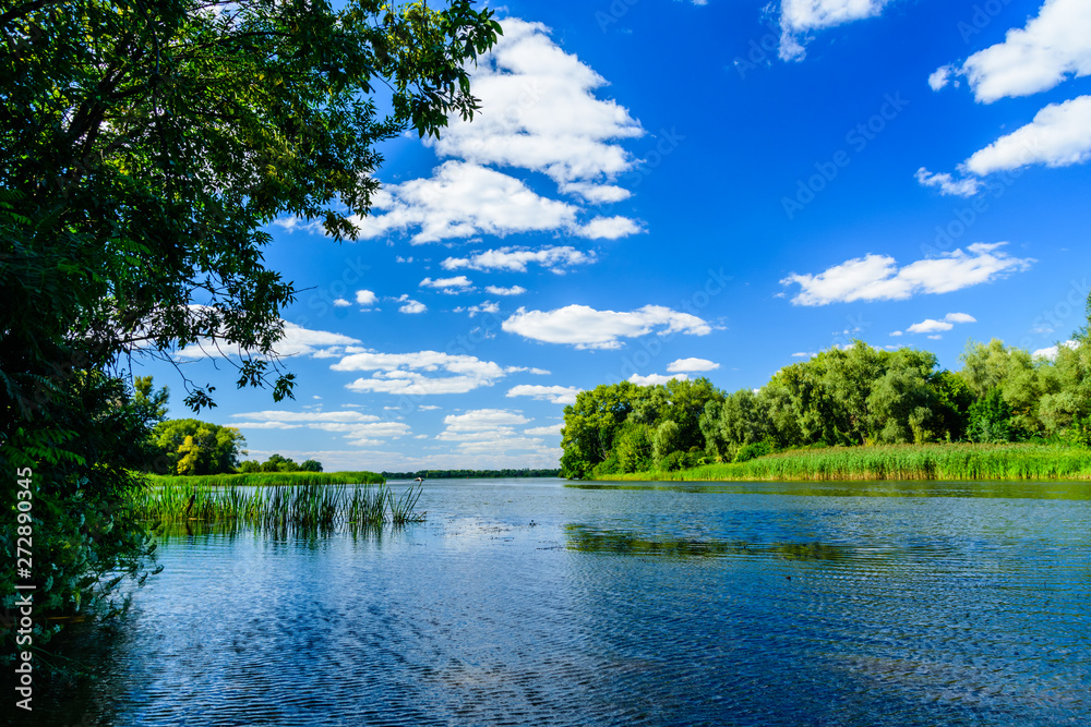 Summer landscape with the green trees and river