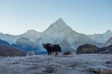 Mt.Ama Dablam (6,812 Metres) A...