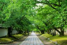 京都 醍醐寺の参道 ...