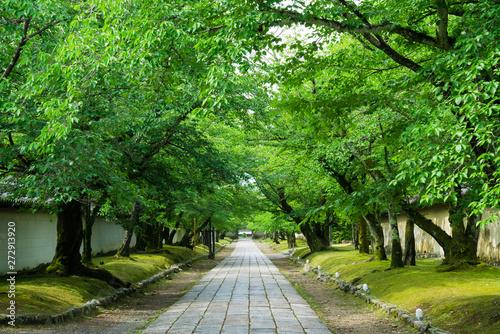 京都 醍醐寺の参道 新緑  Canvas Print