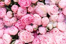 Floral Carpet Or Wallpaper. Ba...