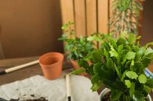 Concept Of Transplanting Plant...