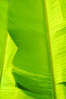 Leinwandbild Motiv Green leaves background. Leaf texture