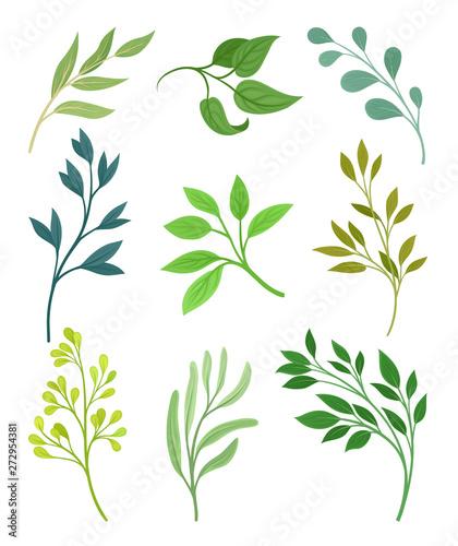 Fototapeta Set of leaves on the stems. Vector illustration on white background. obraz na płótnie
