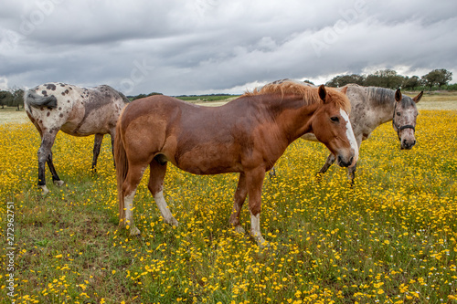Poster Londres Free horses in a blossom meadow