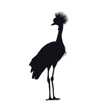 Black Silhouette Of African Grey Crowned Crane On White Background. Isolated Bird Icon. Wild Animals Of Africa. Savannah Nature. Desert Wildlife