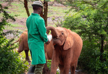 Elephant Orphanage In The Nair...
