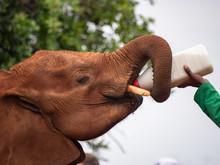Elephant Orphanage In The Nairobi National Park, Kenya