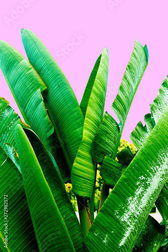 Photo  Green leaves on a pink. Plant lovers. Minimal fashion design