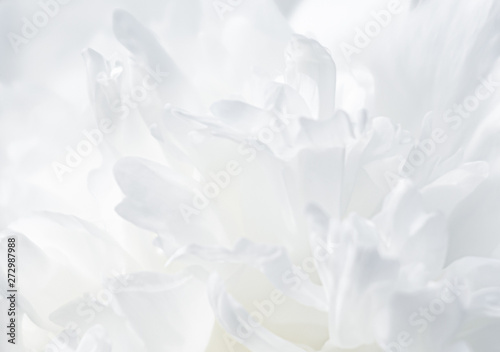 Tuinposter Bloemen blooming peonies in the garden
