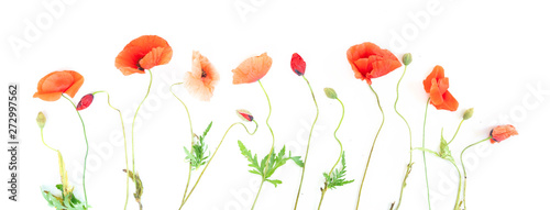 Tuinposter Poppy red poppy flowers