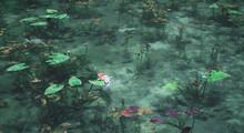 モネの池・名もなき池