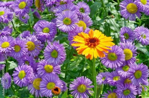 Photo  flowers in the garden