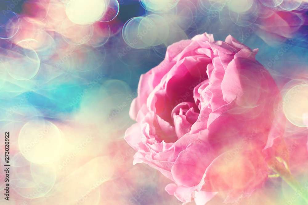 Fototapety, obrazy: bouquet of roses in bed / romance concept, honeymoon background
