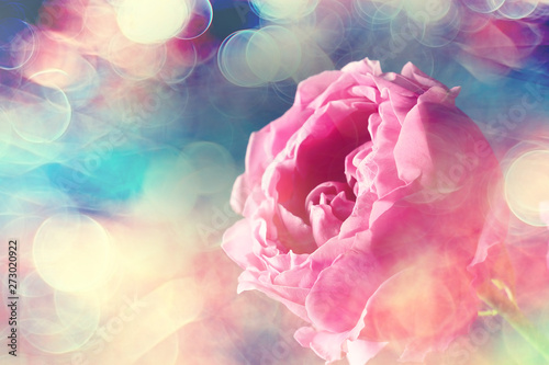 bouquet of roses in bed / romance concept, honeymoon background