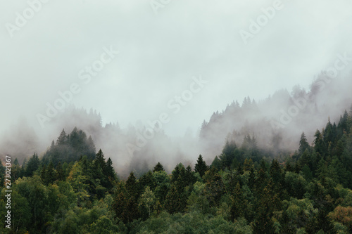 Forest with dense fog in the morning.