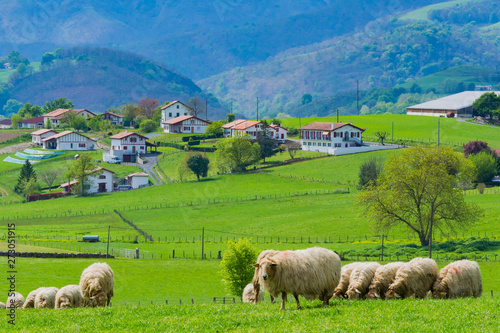 Sheeps at the meadows of the Basque Country