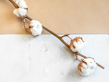 Twig Of Cotton Plant On Concre...