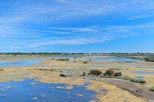 Bird Sanctuary On Island Ile De Re