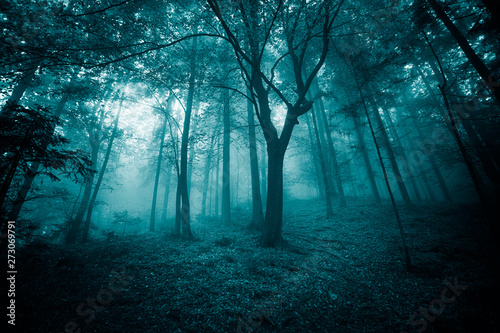 Photo sur Aluminium Bleu vert Mystic turquoise colored foggy fairytale forest trees landscape.