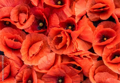 Keuken foto achterwand Bloemen Blossoming poppies, flowers background