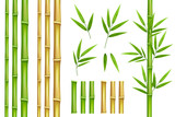Bamboo green and brown decoration elements in realistic style. Seamless vertical borders from stems, isolated leaves and sticks and fresh natural plant.