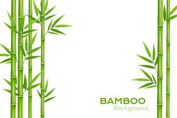 Bambusova pozadina s mjestom za tekst. Realistična vektorska ilustracija sa zelenim stabljikama bambusa s lišćem.