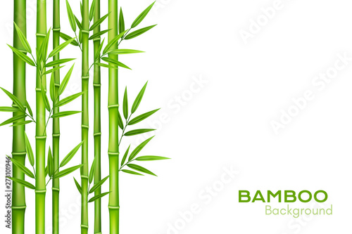Slika na platnu Bamboo background with place for text