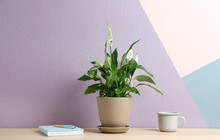 Potted Peace Lily Plant, Cup A...