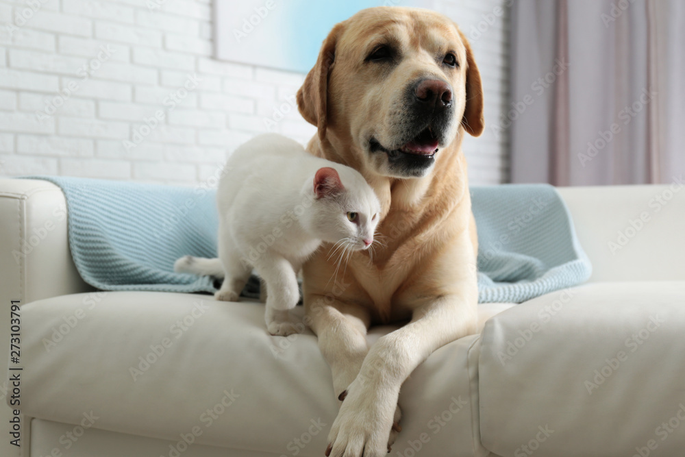 Fototapety, obrazy: Adorable dog and cat together on sofa indoors. Friends forever