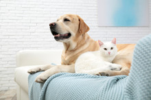 Adorable Cat Looking Into Camera And Lying Near Dog On Sofa Indoors. Friends Forever