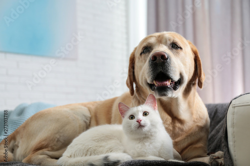 Fototapeta Adorable dog and cat together on sofa indoors. Friends forever
